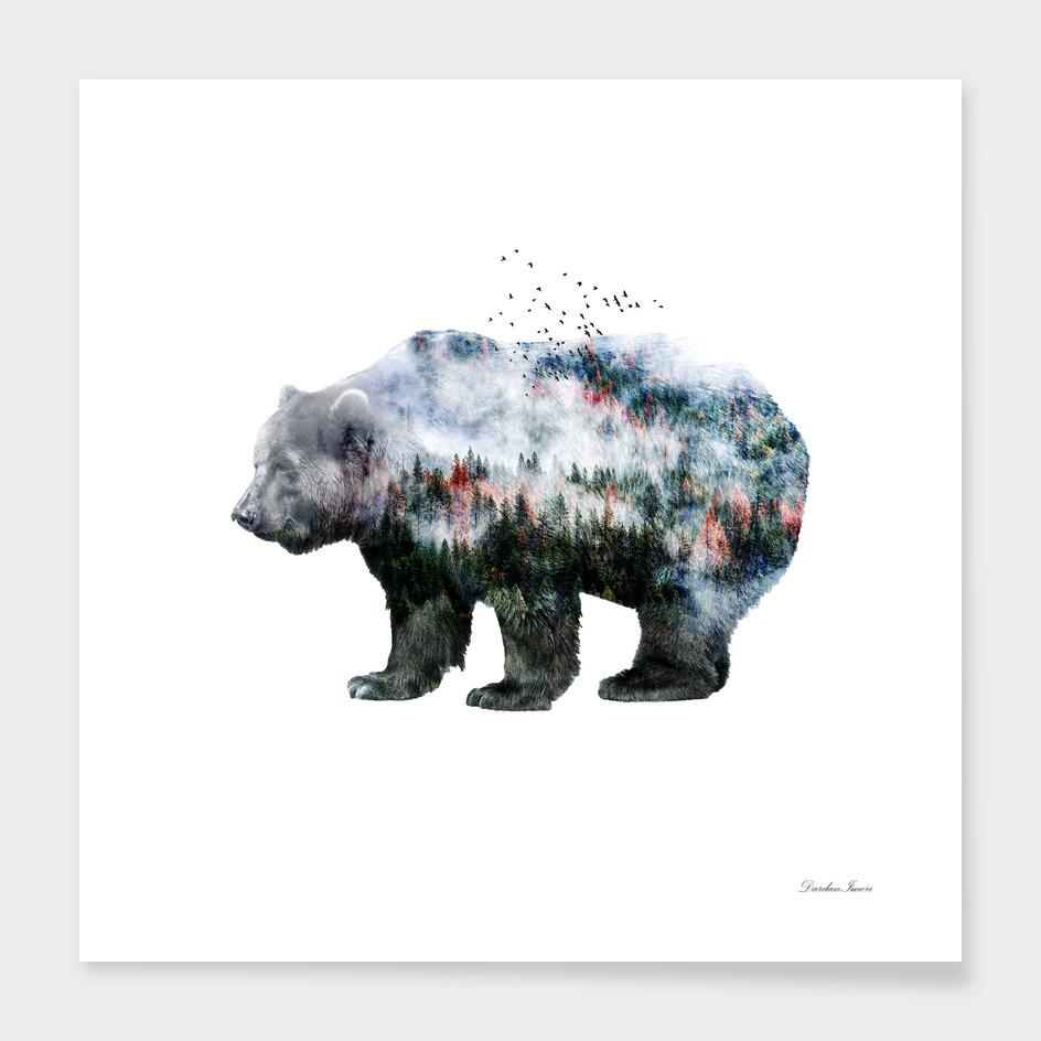 Bear XCI