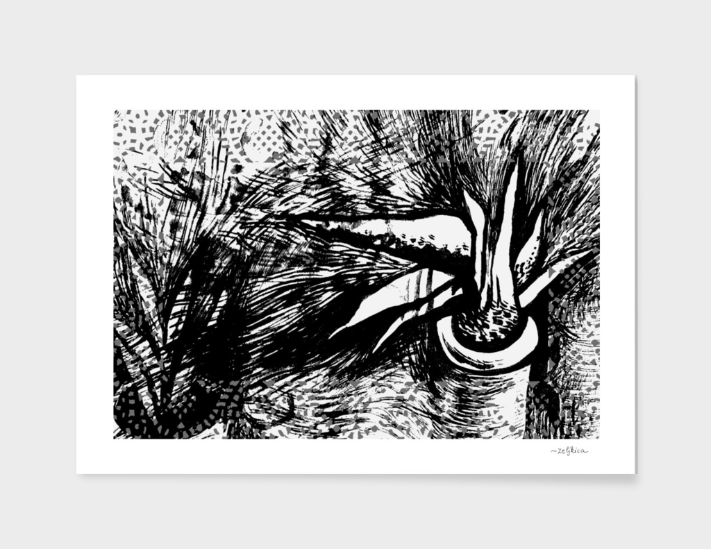 black & white aloe vera