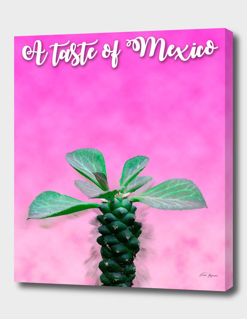 cactus_mex