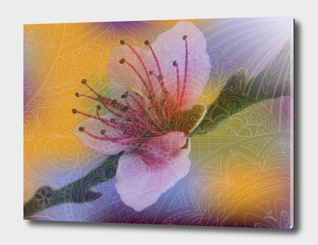 spring zen flower