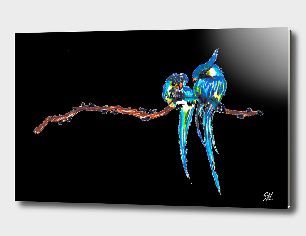 Colorful Bird Couple On A Branch, Black Back