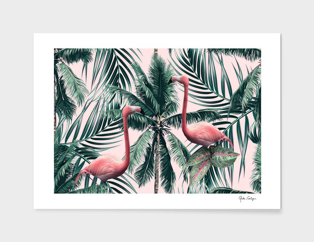 Flamingo tropics