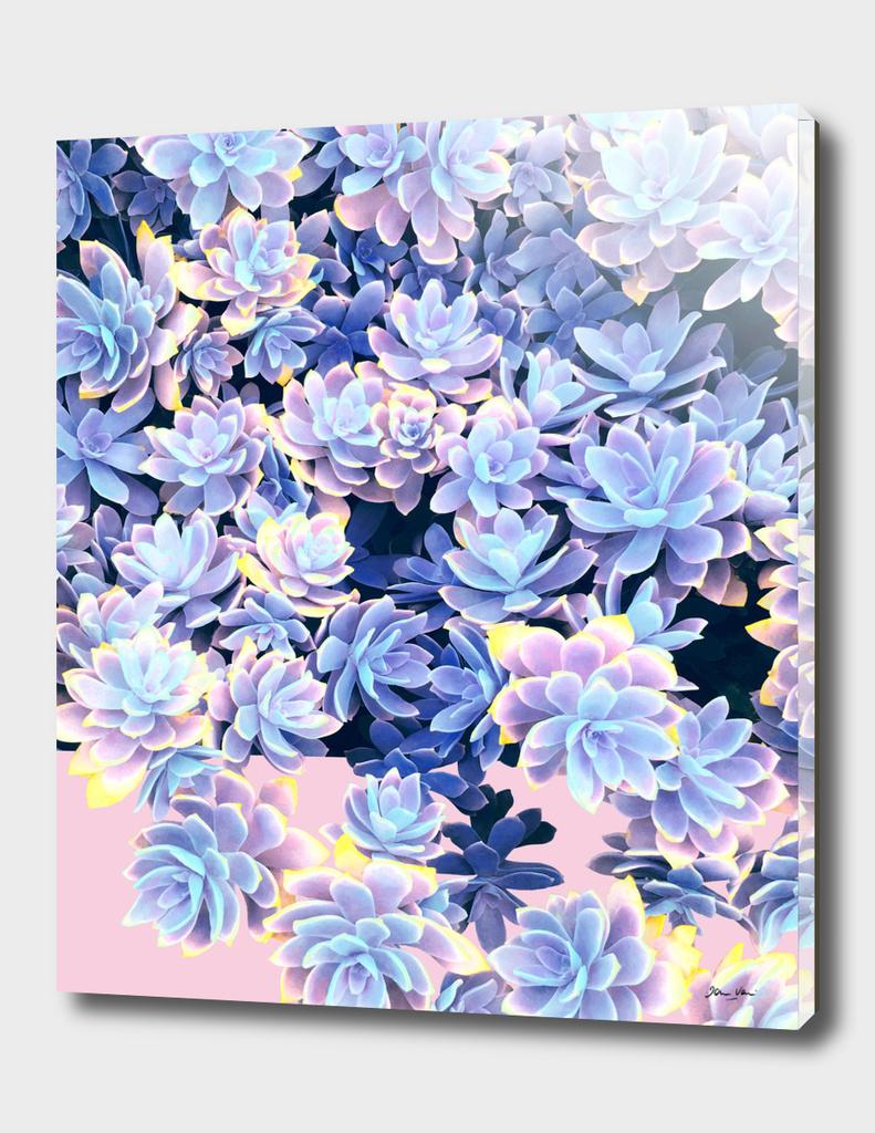 Cactus Fall - Blue & Pink