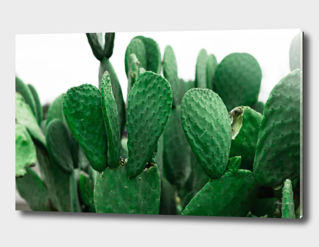 Desert Emeralds