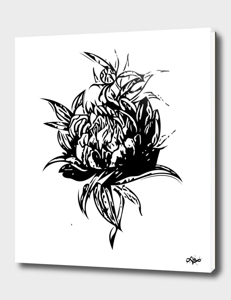 Flower Paeonia 2