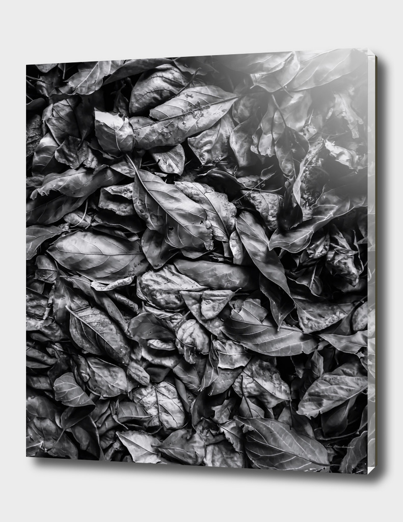 closeup leaf texture in black and white