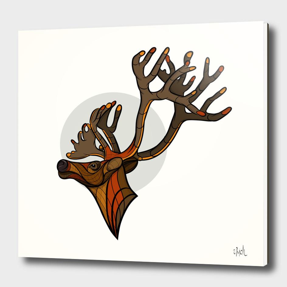 Reindeer - Caribou