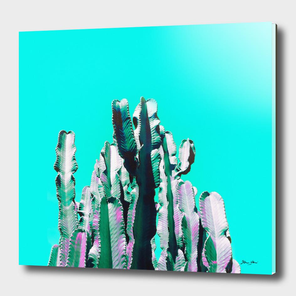 Majestic Cactus