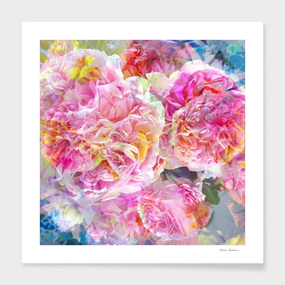 Airy Multicolor Rose Blossoms