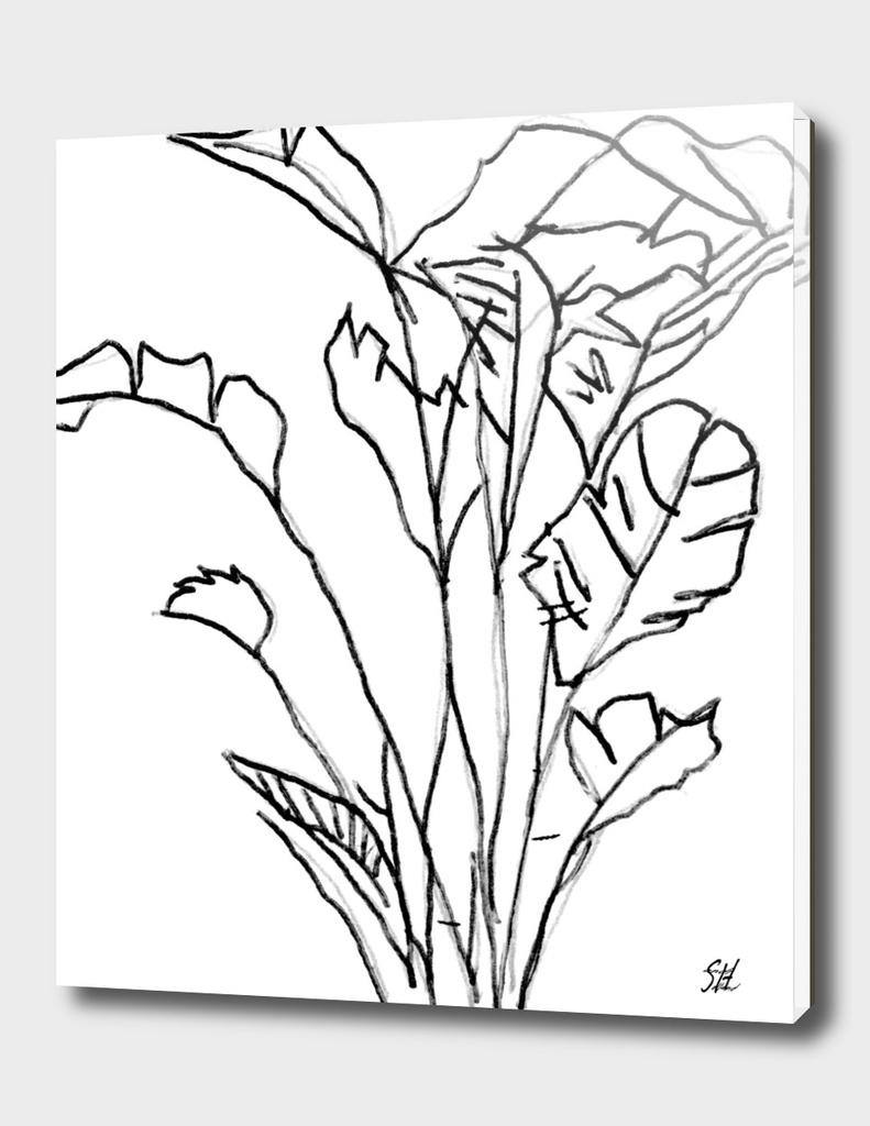 Banana Plant ~ B&W