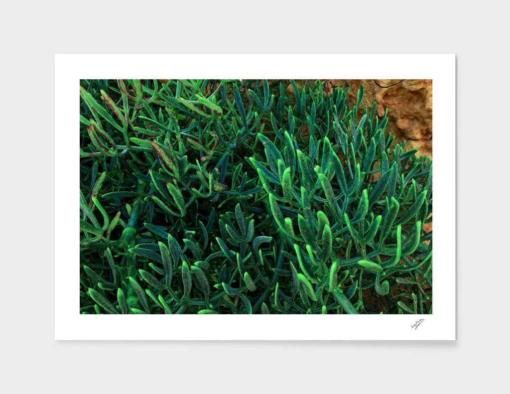 Surreal Succulents