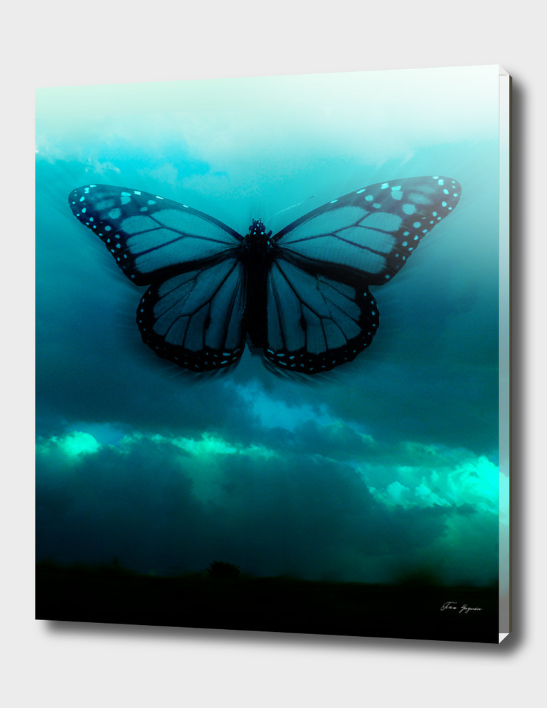 mariposa_cielo_02052017