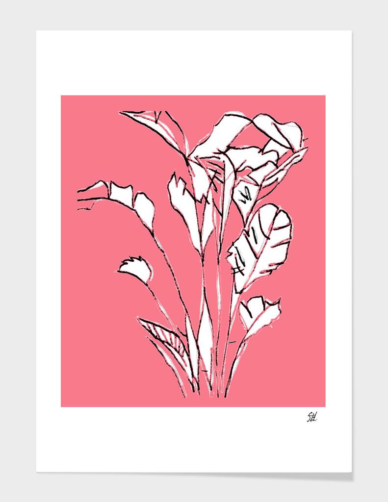 Banana Plant ~ Coral