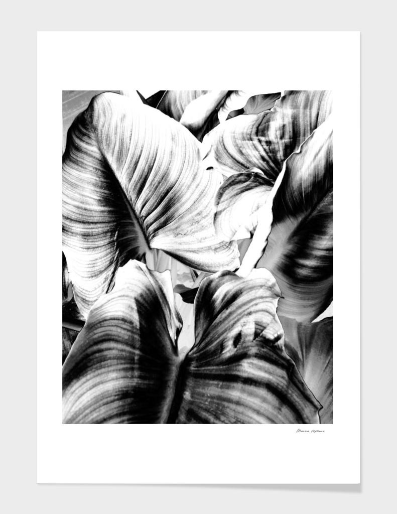 Leaves N.66