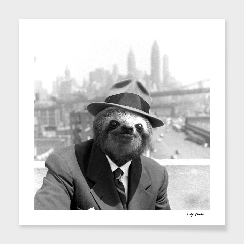 Sloth in New York