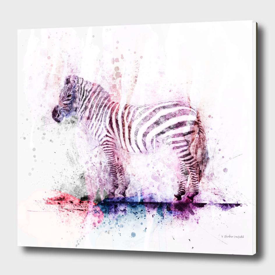 Zebra Color Wash