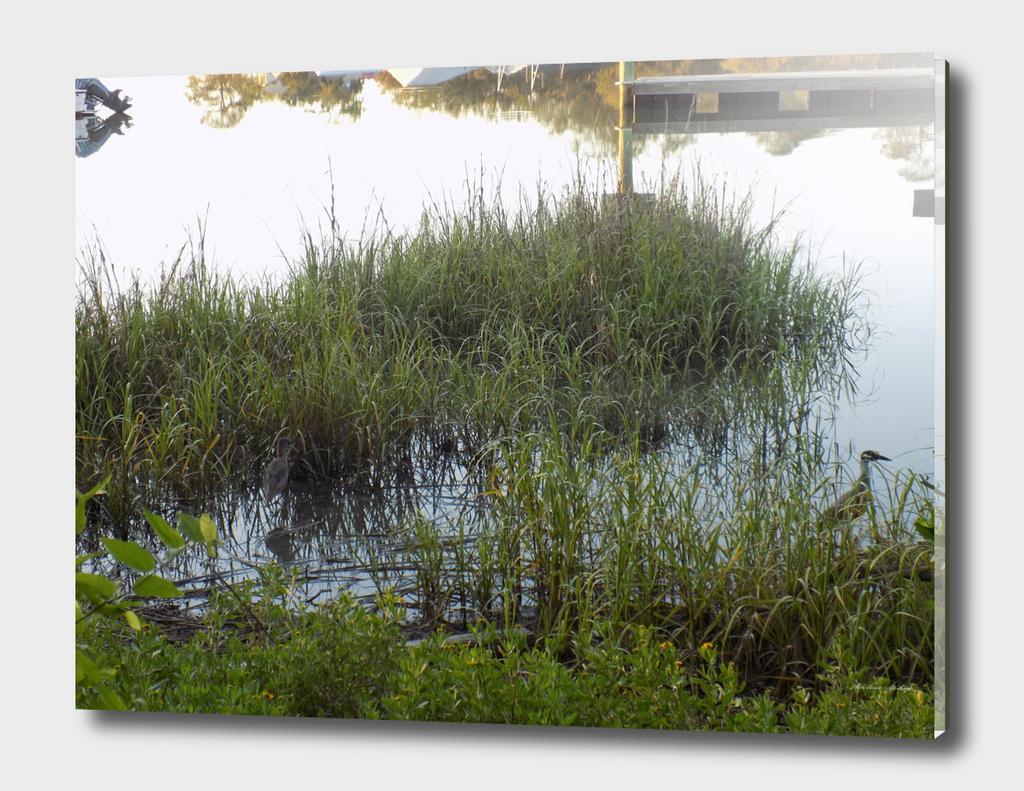 Tybee Island wild life