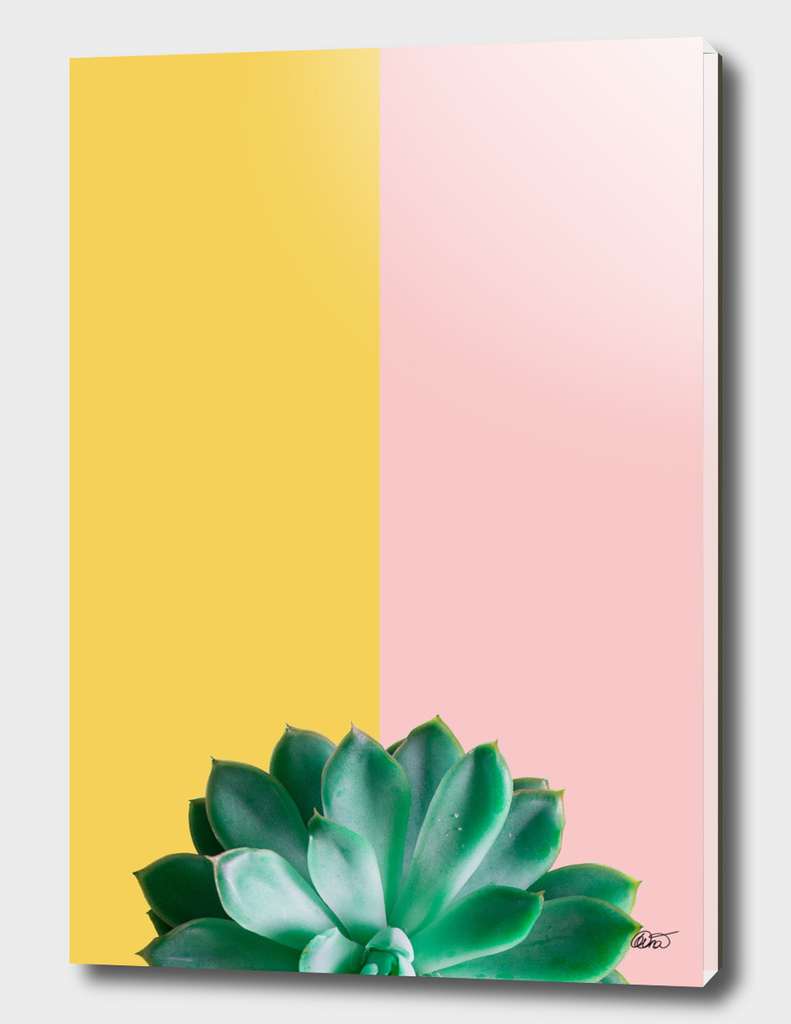 Two Tone Succulent