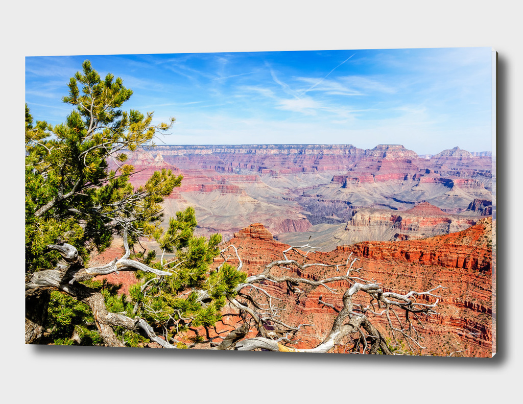 Juniper tree at Mather point - Grand Canyon