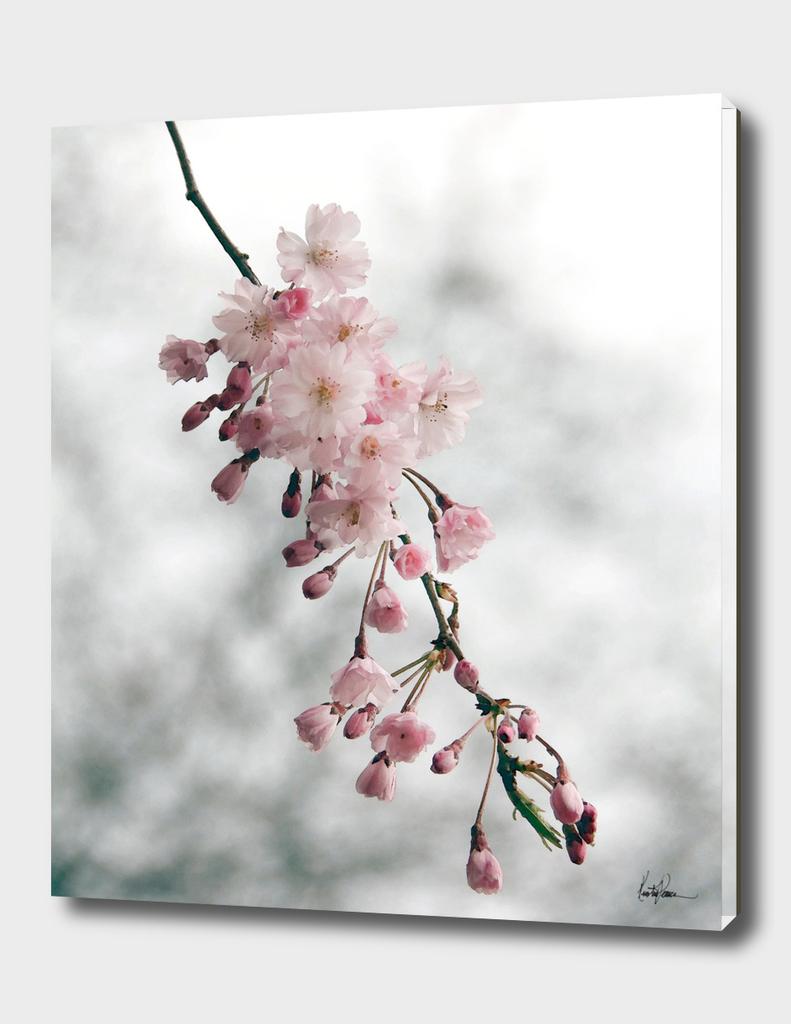 Dangling Blossom