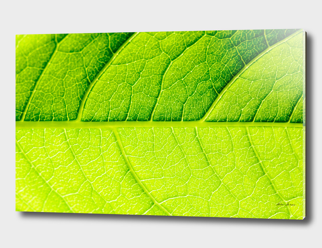 Horizontal Green