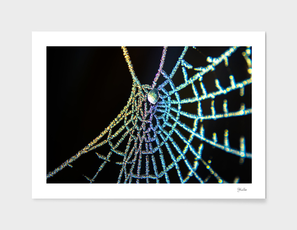 Colourful spiderweb