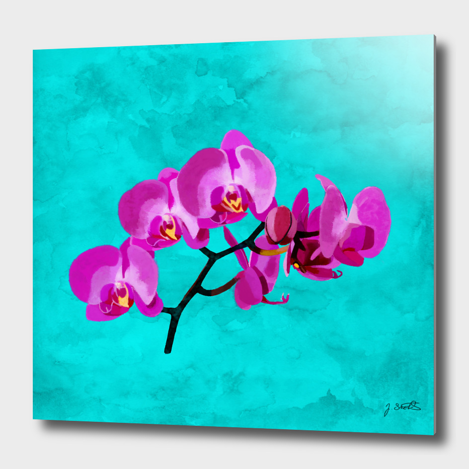 Orchid, pink