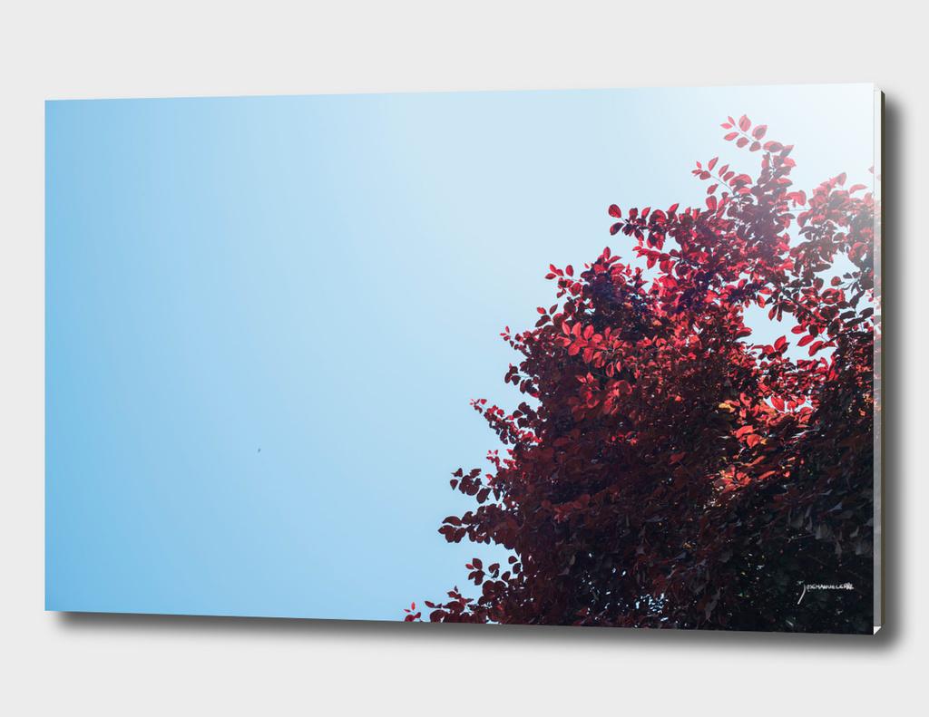 Dear red tree