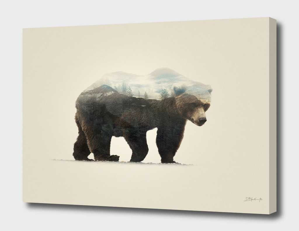 Bear | Double exposure