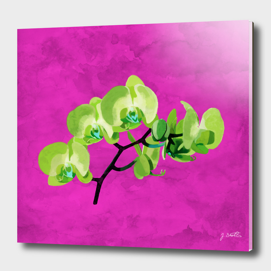 Orchid, green
