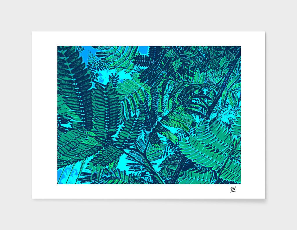 Mimosa Ferns 2 ~ Bright Blue Sky