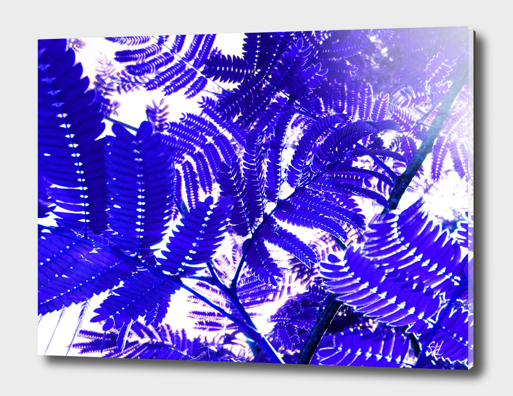 Mimosa Ferns 7 In Blue