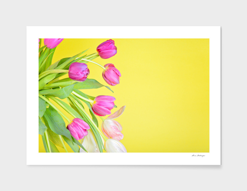 View to the multicolored tulips over yellow paper