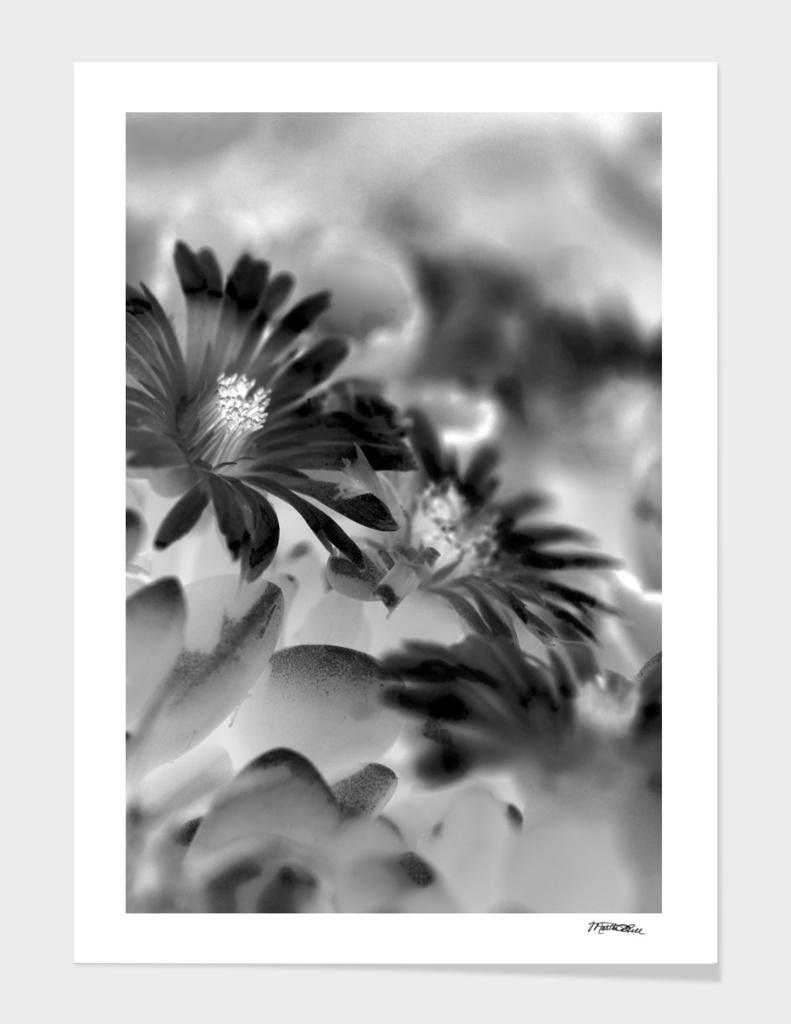 Little flowers Petals BW