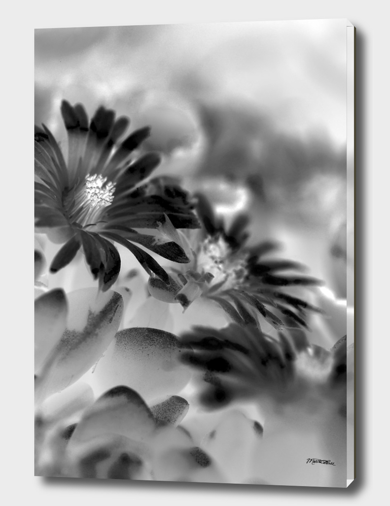 Little flowers Petals BW