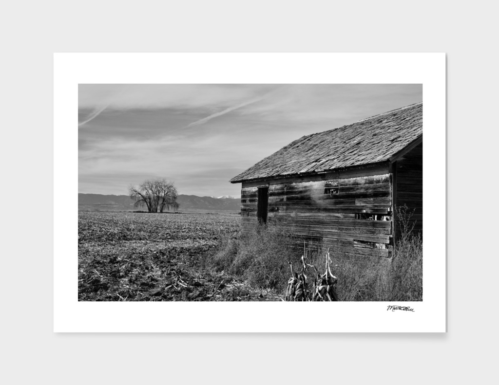 Waiting Fields of the Prairie
