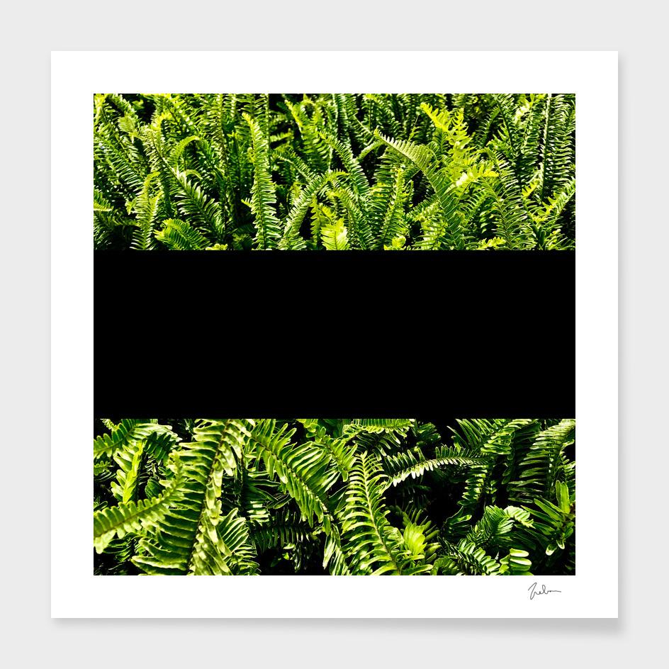 paprat (black)