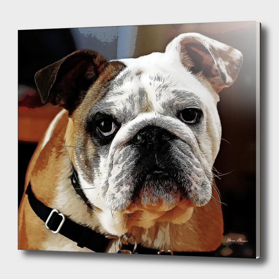 Adorable Bulldog Face