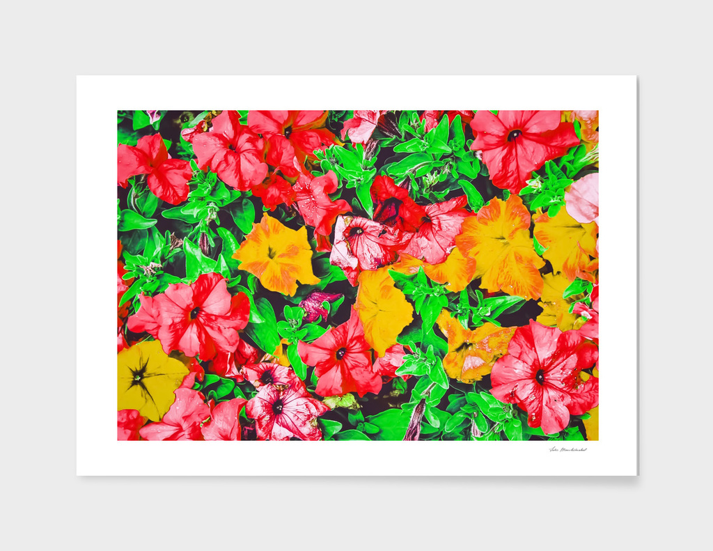 closeup flower abstract background in pink red yellow