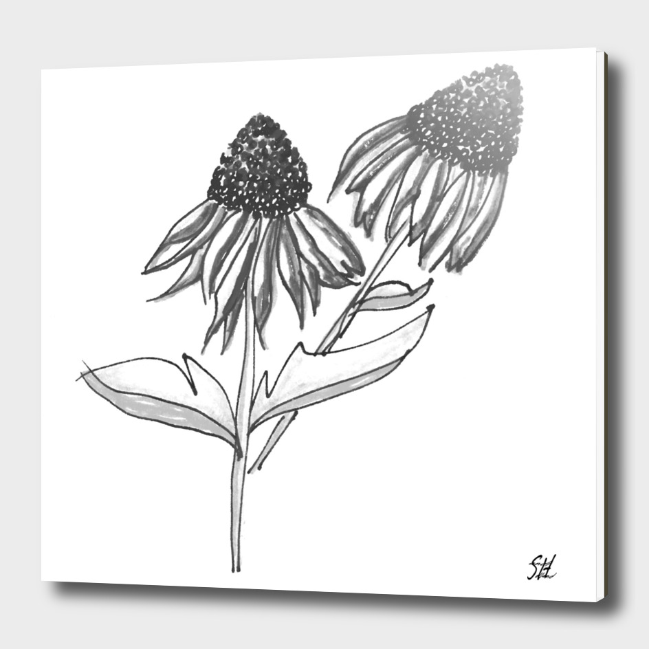 Purple Cone Flower ~ B&W
