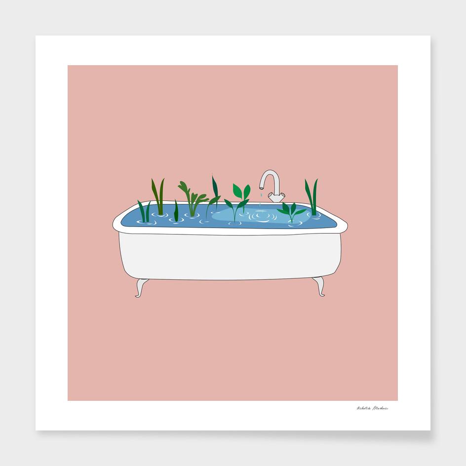 tub plants