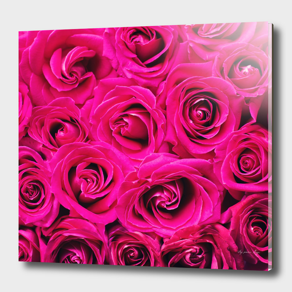 Romantic Pink Purple Roses Pattern