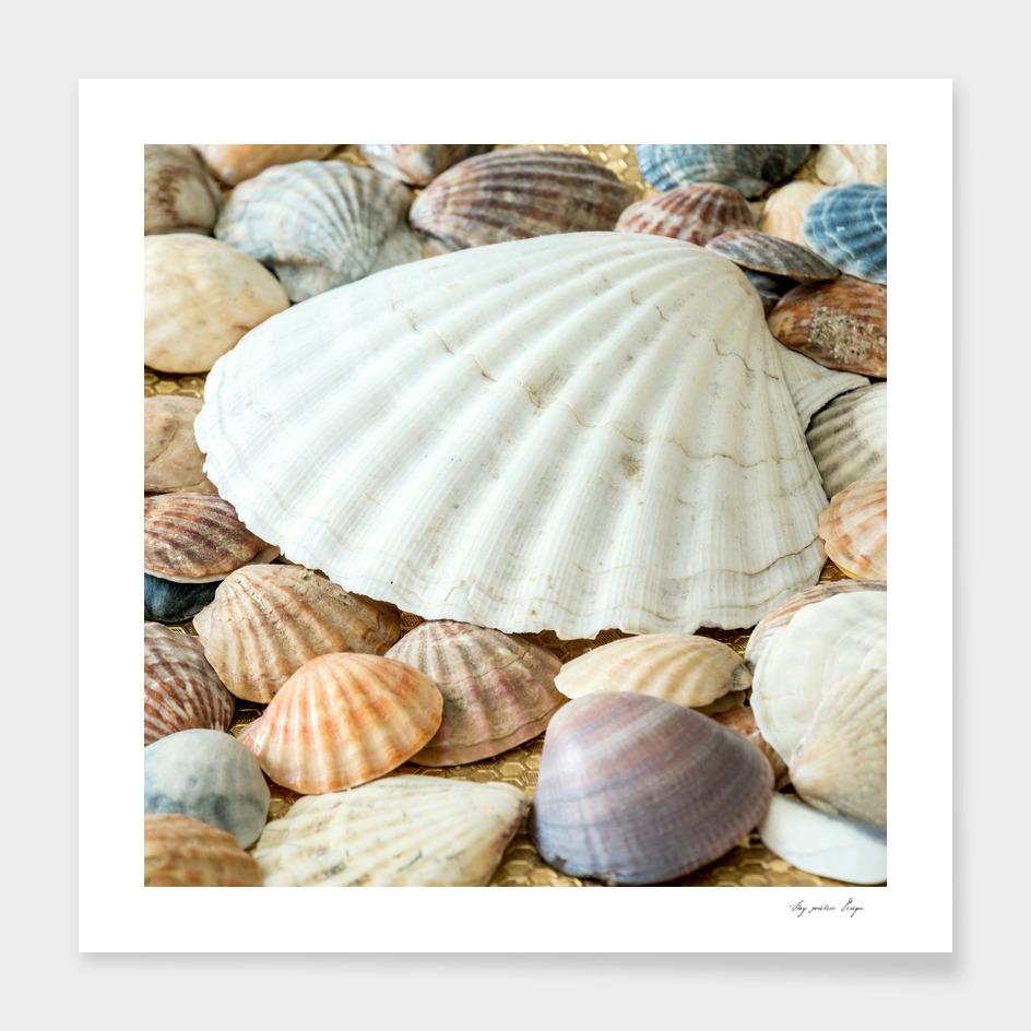 Sea Shells -  Ocean, Sea, Nature
