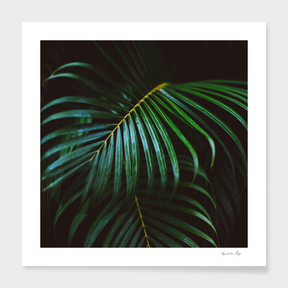 Green Tropical Palm Leaf