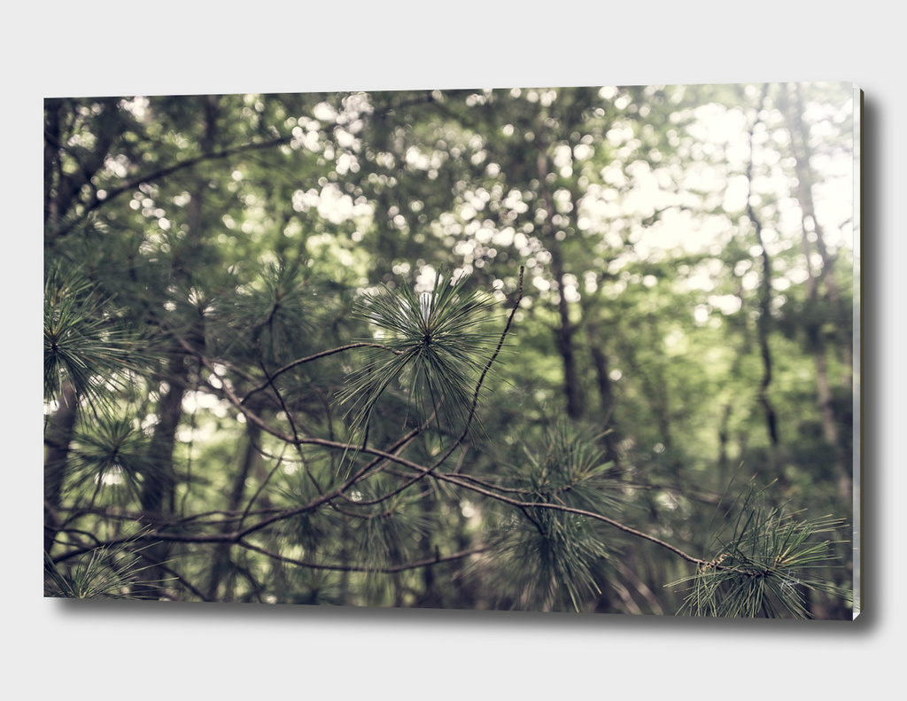 Needles-From the Nature As Abstract Series