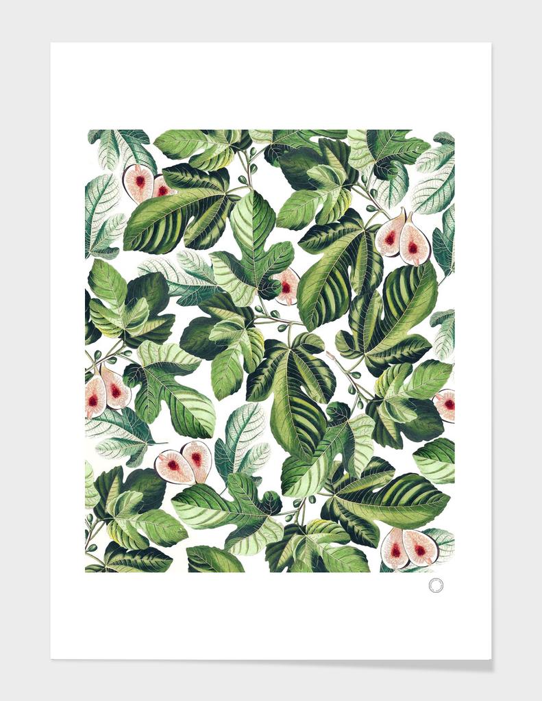 Fig Garden
