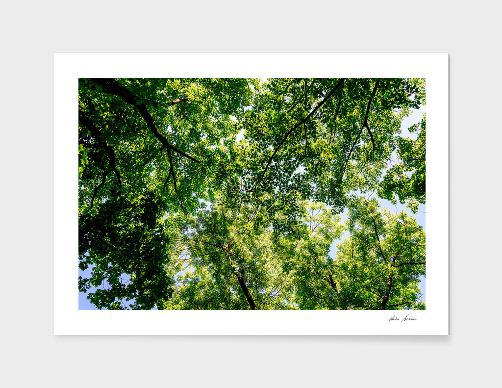Tree Branches And Leaves On Summer Blue Sky