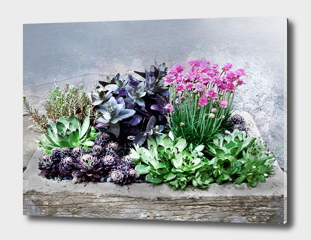Succulent Container Garden 1