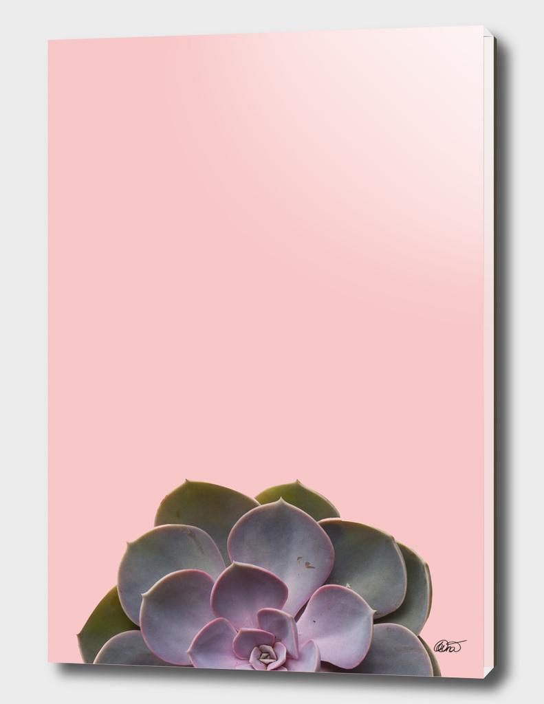 Summer Succulent