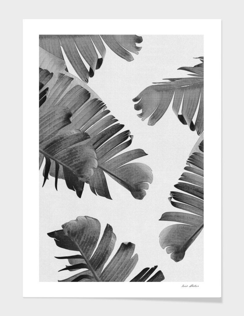 Palm Leaves Monochrome
